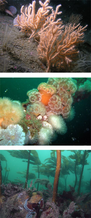 Diving-vert-merged