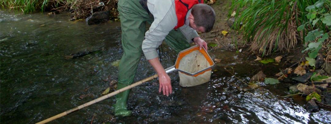 Freshwater Ecological Assessment