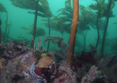 Kelp forest condition assessment