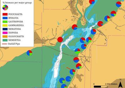 Marine fauna biomass analysis